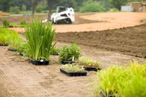 """New plants ready to be added to a commercial buildingaas landscape. This will be a wetland area which is being prepared by a skid loader in the background. The tan area is a coir (coconut husk) erosion blanket, which will allow the plants to establish before the blanket biodegrades."""